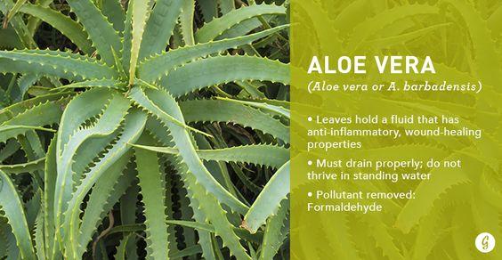 air-purifying-plant-greenery-inspiration-interior-design