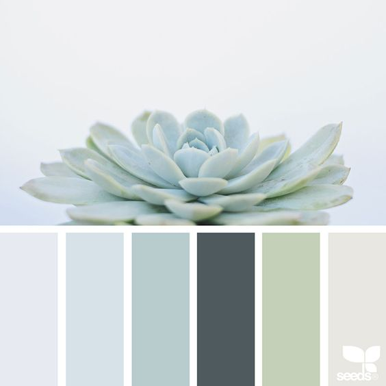 design-seeds-color-palette-soft-hues-inspiration-interior-design-succulent