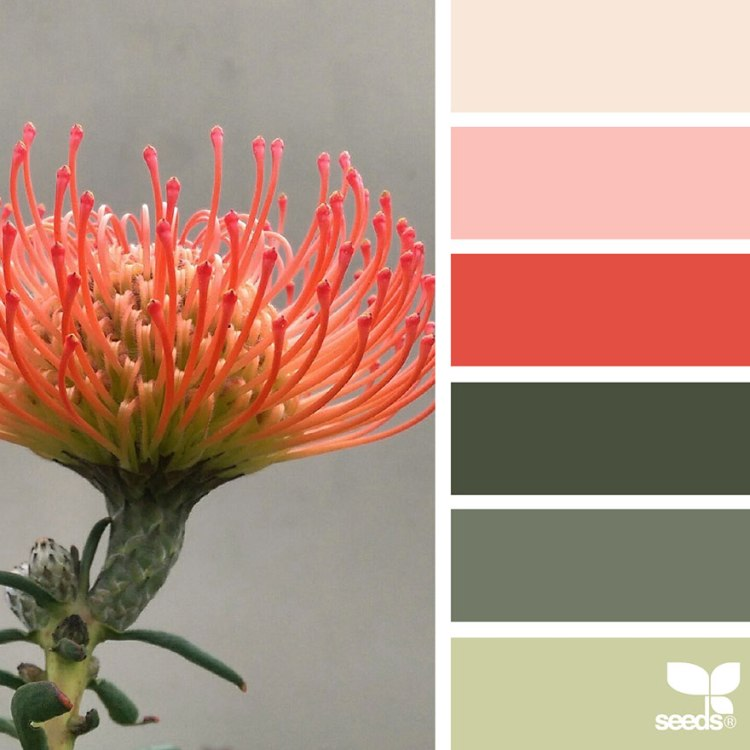 design-seeds-color-palettes-inspired-by-nature-outside-in