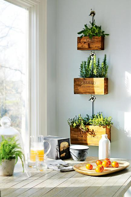 hanging-indoor-plants-timber-boxes-kitchen-plants-wall-nature-natural