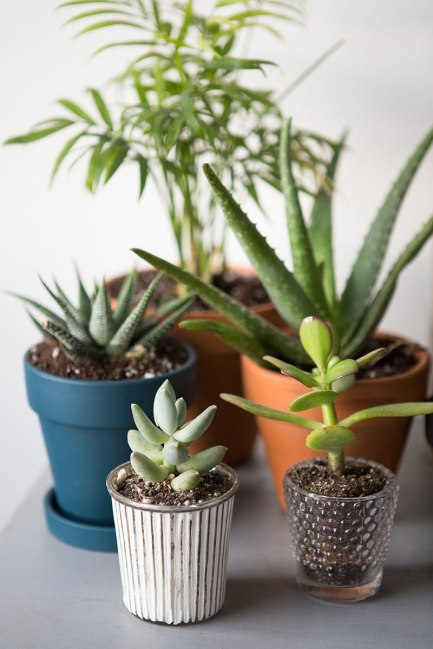 the-everygirl-easy-indoor-plants-succulents-and-cactus-nature-natural