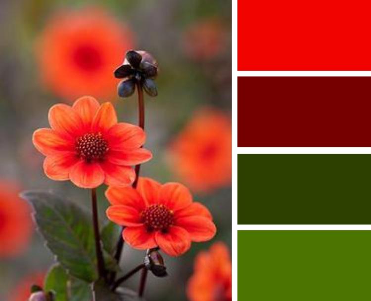 4-4 Blog Palettes5