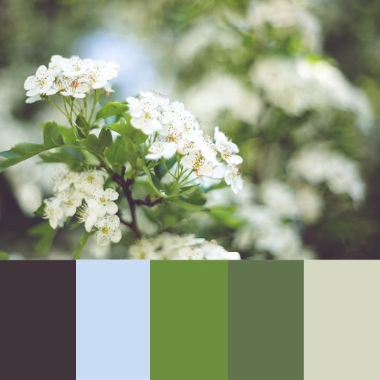 Feminine Blog Pastel Palettes