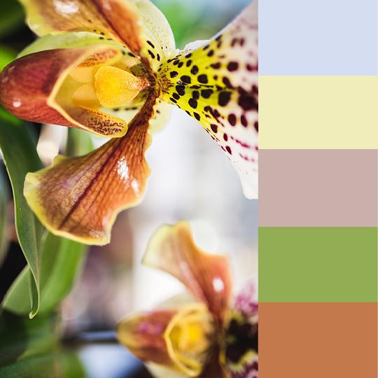 Feminine Blog Pastel Palettes4